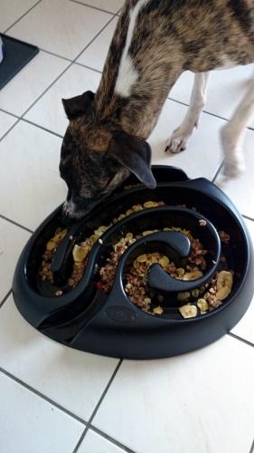 Anti Schling Hundenapf -Buster DogMaze-